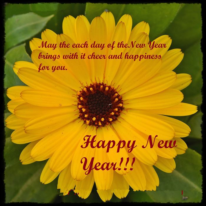 Free Beautiful Happy New Year Flower Images