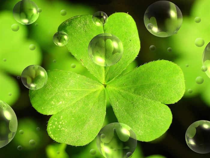 Best St. Patrick's Day Images Wallpaper Free