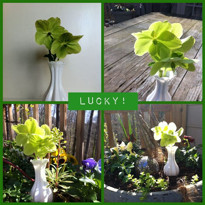 Beautiful St. Patrick's Day Flowers Pictures Ides Free