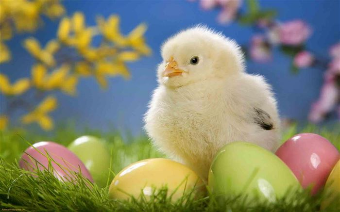 Best Easter Pictures With Baby Chicks