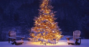 Best Free Xmas Tree Images For Facebook